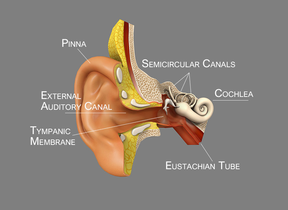 The Clinical Examination of the Ear